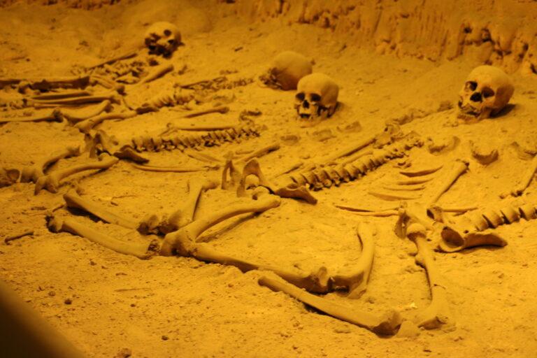 Szczątki w Muzeum Antropologii - atrakcje Mexico City, co zobaczyć?