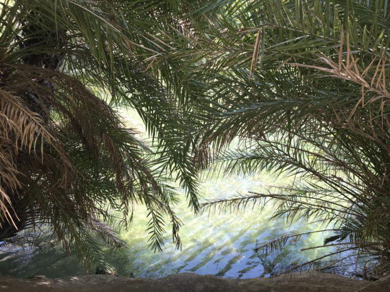 Palmy i rzeka w Preveli Beach, Kreta